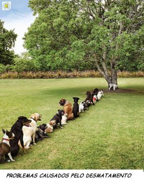 Olha o que o desmatamento faz...
