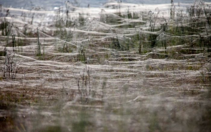 spiders_05