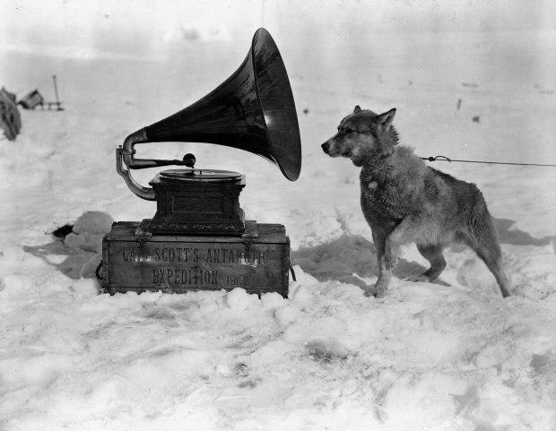 ponting_1911_dog_listening_to_gramophone_antartica-1