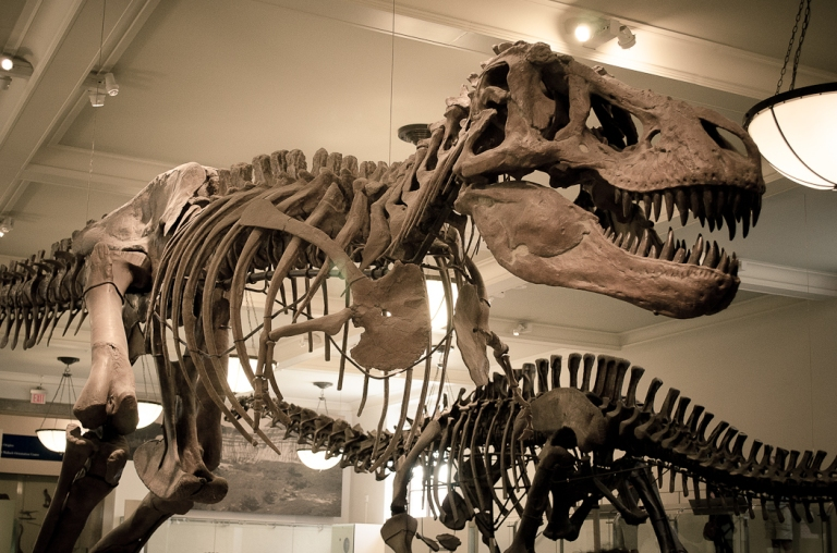 museu-historia-natural-nova-york