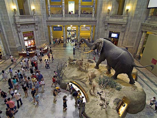 New-York-City-Tourism-in-American-Museum-of-Natural-History