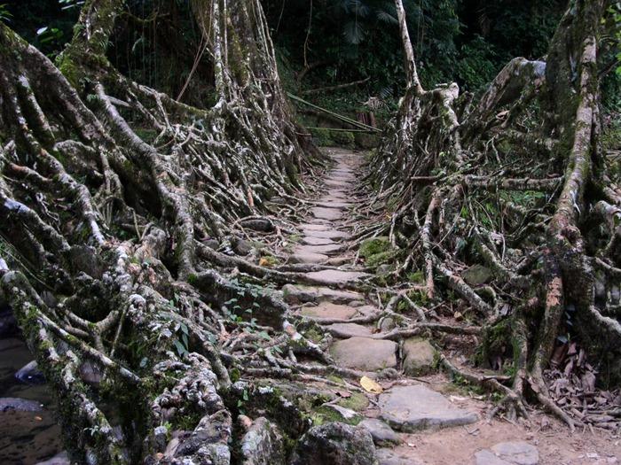 root-bridges (1)[2]