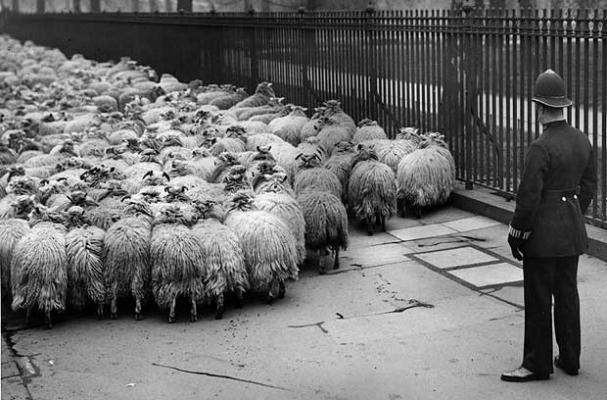 sheep-and-policeman-1931