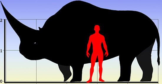 Tamanho comparativo do animal com o homem